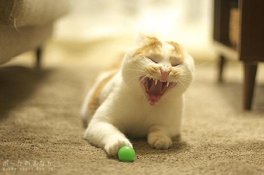 緑って!丸って!