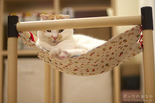 今日飼い主は、毛布をかぶりながら・・