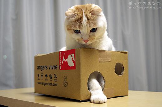 僕は箱にはうるさいよ。どれどれ・・む!
