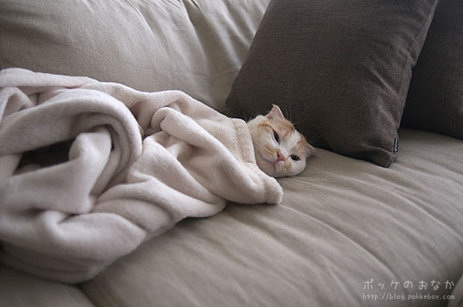 寝るのが仕事