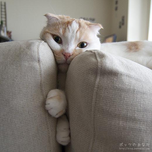 何がそんなに面白いの?