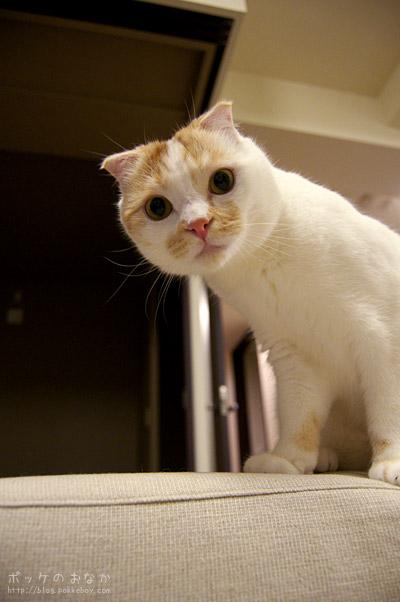 はーい、全国の猫たち注目ー