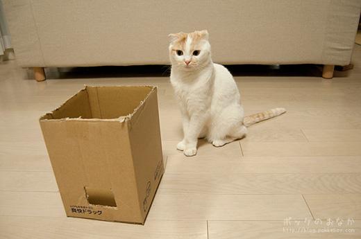 箱ならなんでも入ると思ってない?
