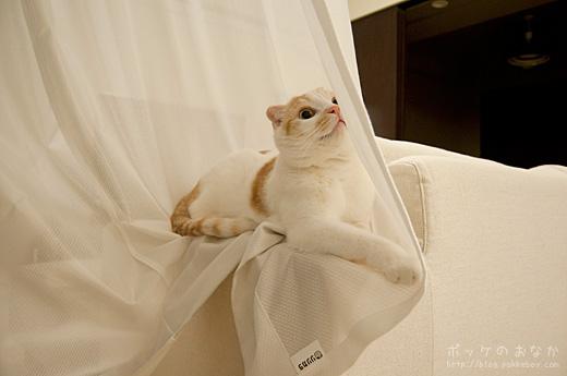 わが名はカーテン大王。みなのもの、ひれふせ・・