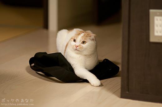 これは飼い主のバッグ