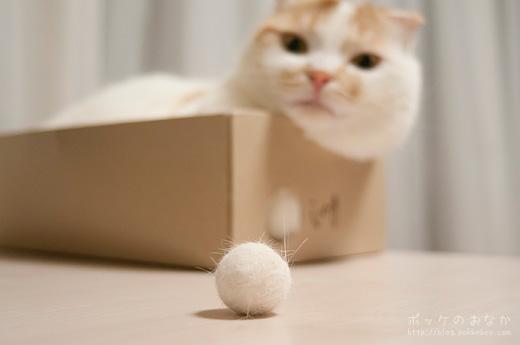 !? ボールになった!