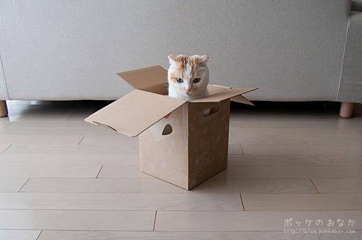 これは・・いい箱!