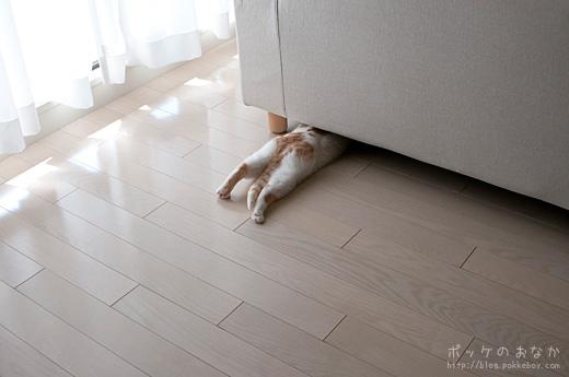 ソファ下異常なしであります!