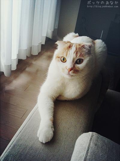 ここは僕の席