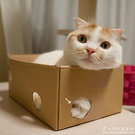 箱の中にいるのに触られている感触がする不思議!