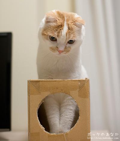 前の箱どうした