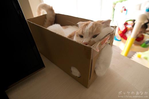 この箱にももう慣れたね。むしろ居心地いいね。