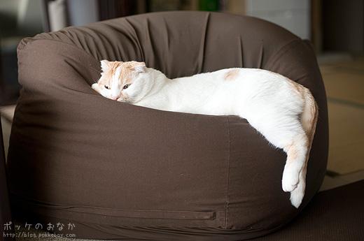 画像 : 一人暮らしでもソファーを置きたい!1K・1DKレイアウト ...