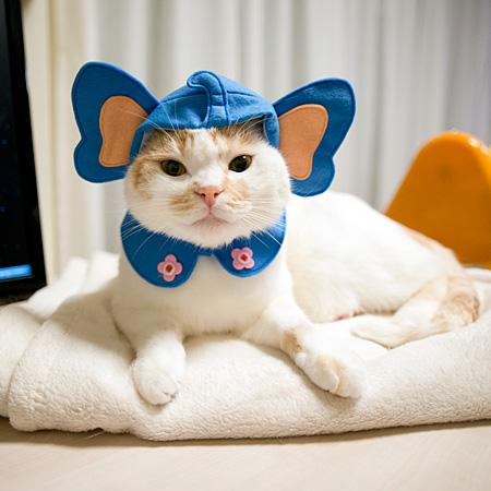 猫ってゆぅのは・・哺乳類・・像も・・(略