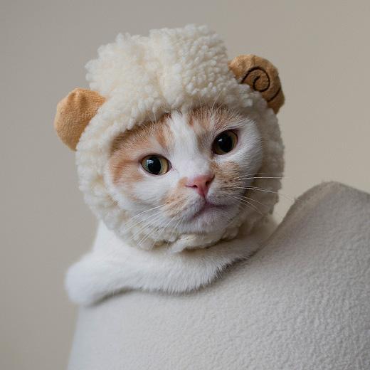 羊・・なのか?