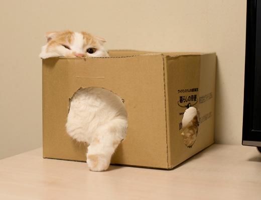 たまには箱もいいね
