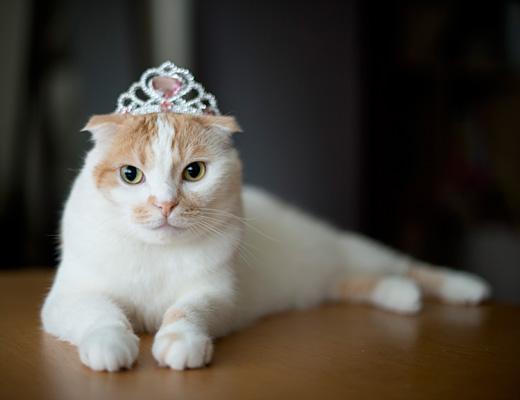 て、プリンセスかーい!