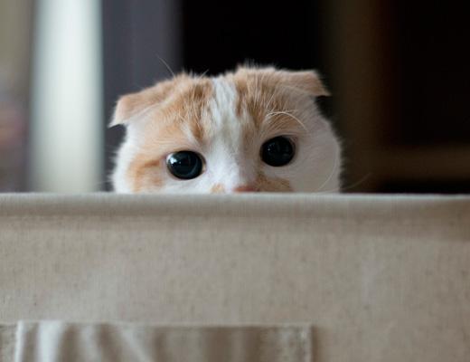 入ってていい?