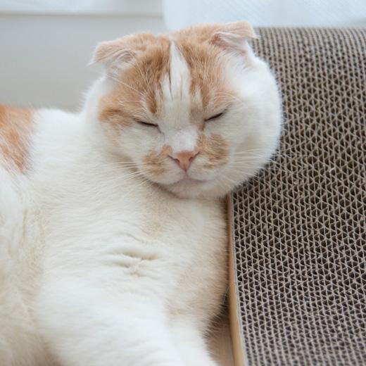 枕にちょうどいい・・