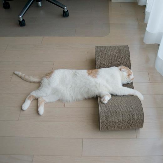 枕だねやっぱり