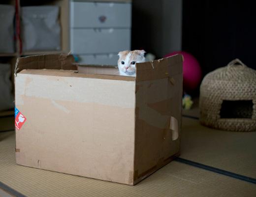 これはいい箱・・!