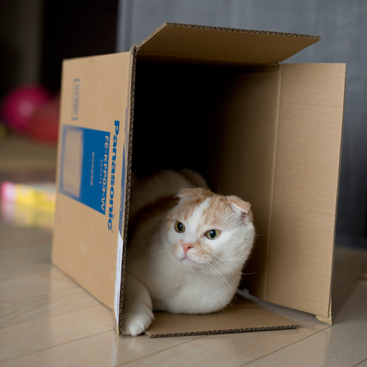 箱があったらとりあえず入る